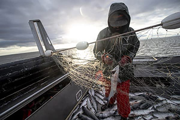 The Bristol Bay salmon run: Known to some fishermen as the 8th Wonder of the World