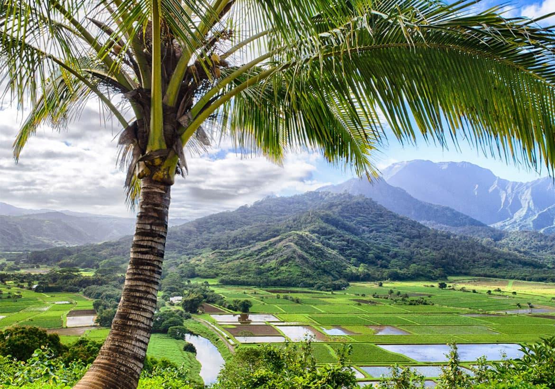Hawaii service resumes/expands for Kahului, Lihue, Kailua-Kona and Honolulu