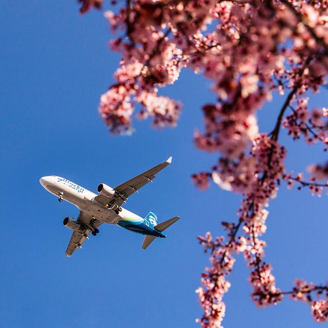 Spring schedule alert: More transcon flights.