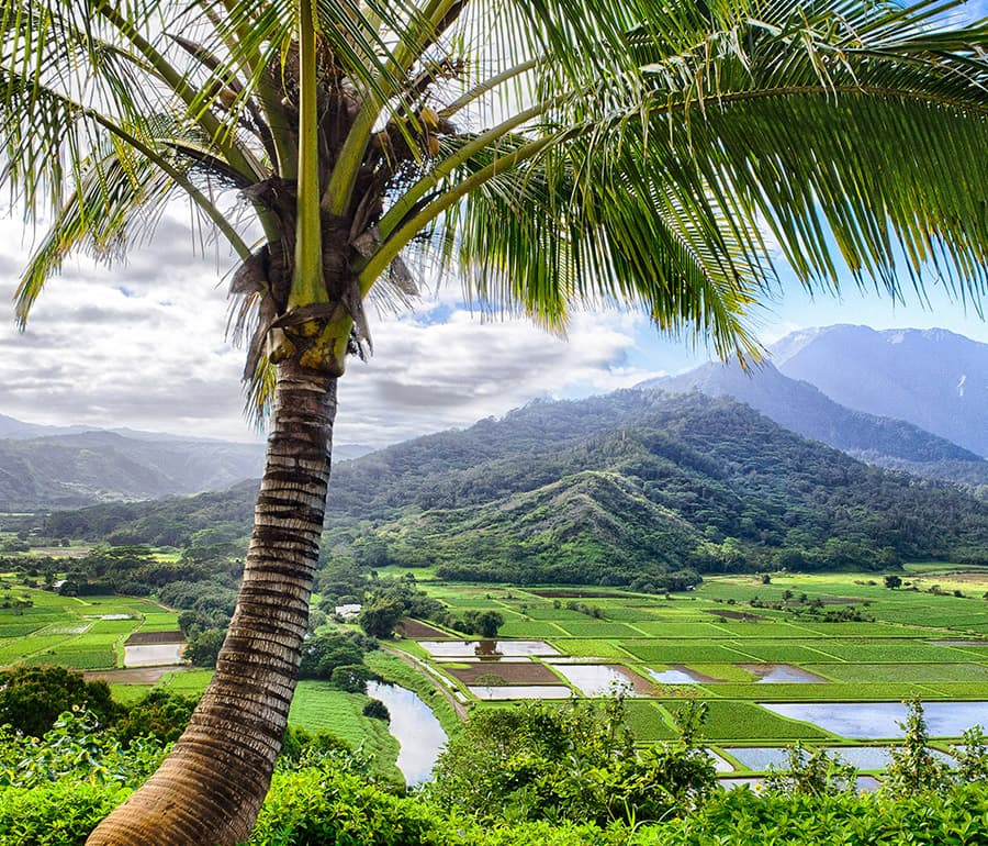 Exciting growth in Hawaii provides new opportunities for freight forwarders.